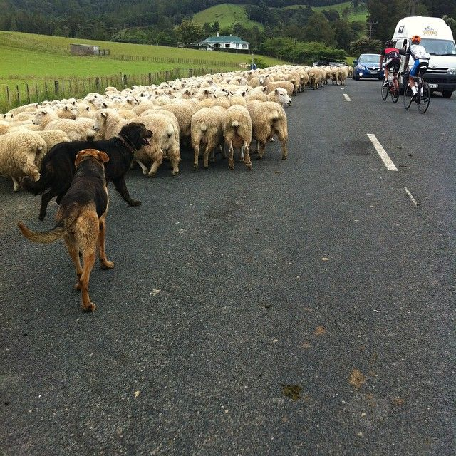 KIwi Gridlock on the TdR course